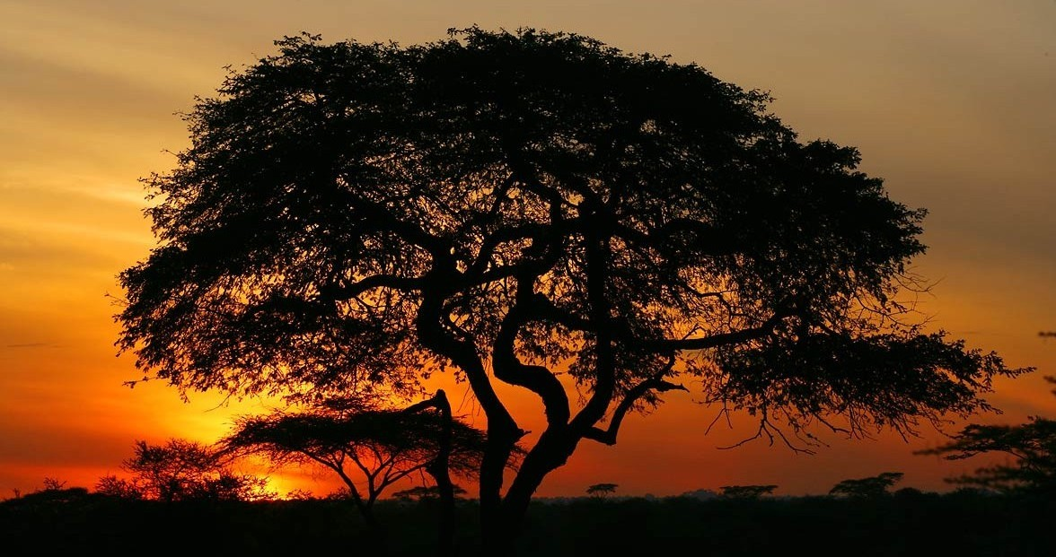 Afrika, Tansania,  Sonnenaufgang in der Serengeti