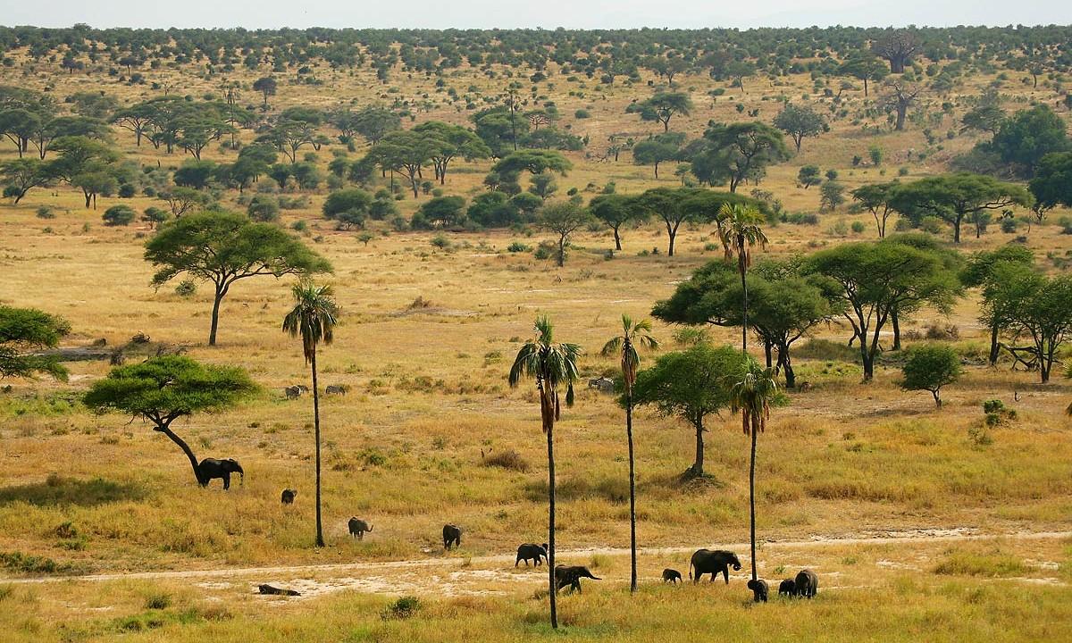 Afrika, Tansania, Tarangire National Park, Elefanten